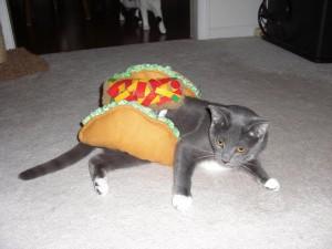 Cat Taco Costume